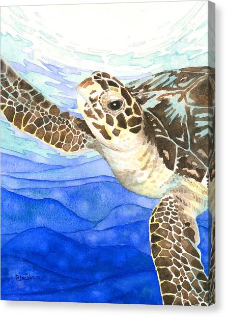 Curious Sea Turtle Canvas Print