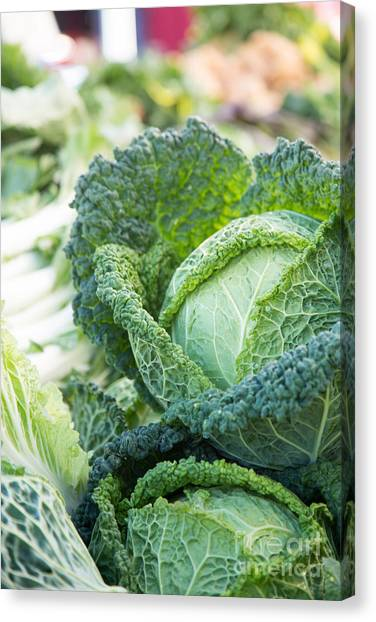 Cabbage Canvas Print - Curly Cabbage by Rebecca Cozart