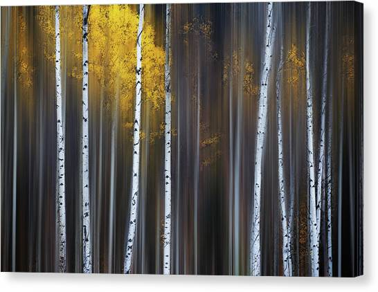Tree Trunks Canvas Print - Curtain Of Fall by Andy Hu