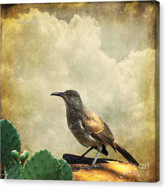Curved Bill Thrasher Canvas Print