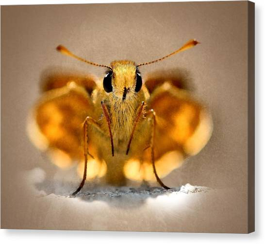 Cute And Curious Brown Butterfly Canvas Print