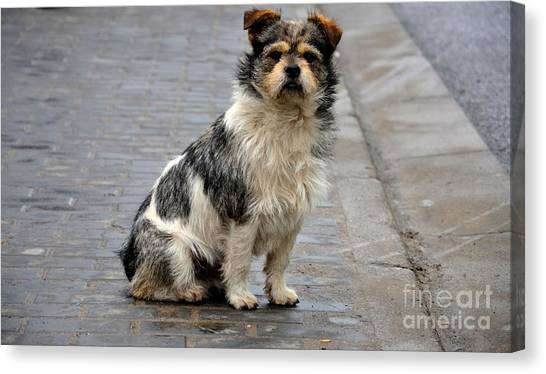 Cute Dog Sits On Pavement And Stares At Camera Canvas Print