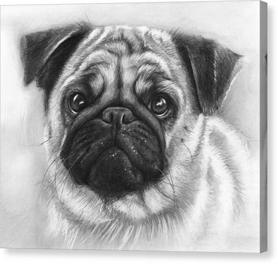Pugs Canvas Print - Cute Pug by Olga Shvartsur