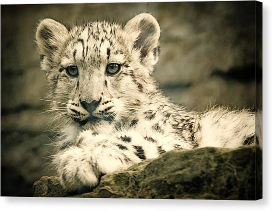 Cute Snow Cub Canvas Print