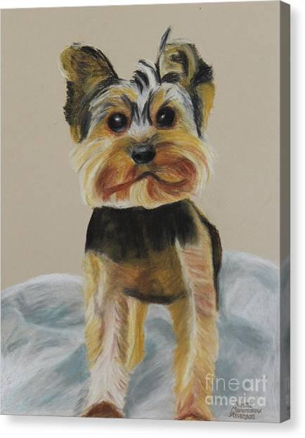 Cute Yorkie Canvas Print