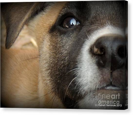 Cuteness Abounds Canvas Print