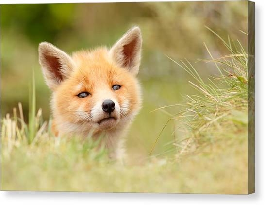 Camouflage Canvas Print - Cutie Face _red Fox Kit by Roeselien Raimond