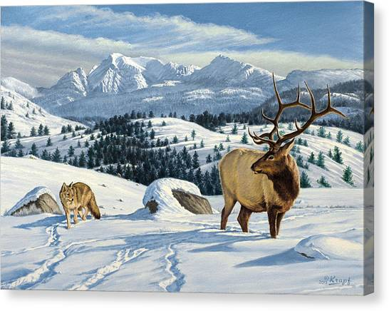 Coyotes Canvas Print - Cutoff Mountain -  Elk And Coyote   by Paul Krapf