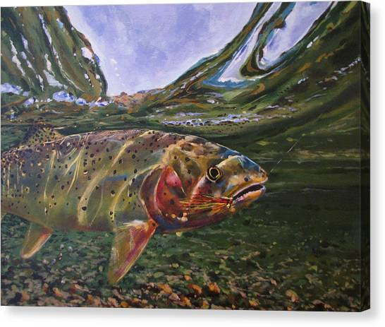 Cutthroat Hooked In The Ripple Canvas Print