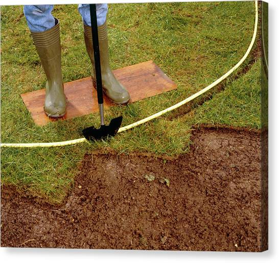 Shovels Canvas Print - Cutting A Flowerbed by Science Photo Library