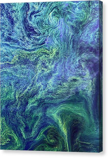 Satellite Canvas Print - Cyanobacteria Bloom by Nasa