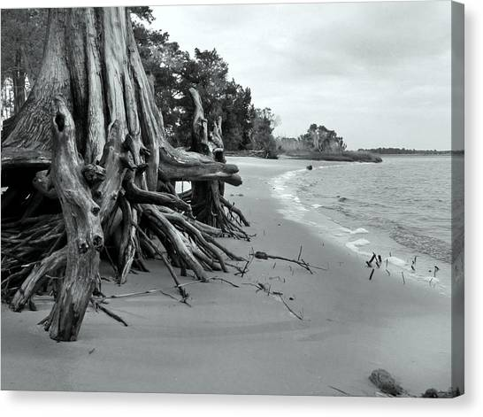 Cypress Bay Canvas Print