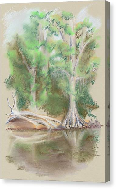 Cypress By The Waccamaw River Canvas Print by MM Anderson
