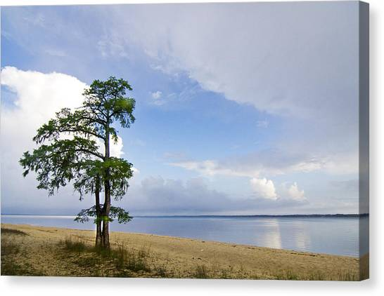 Cypress On The Neuse Canvas Print