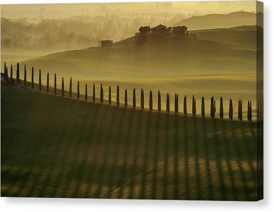 Rolling Hills Canvas Print - Cypress Shadows by Jarek Pawlak