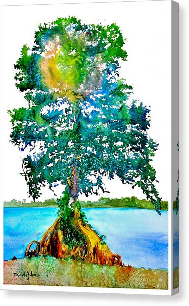 Da107 Cypress Tree Daniel Adams Canvas Print