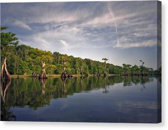 Cypress Wall. Blue Cypress Lake. Canvas Print