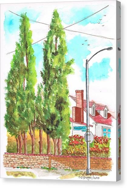 Cypresses In Massachusett Ave - Westwood - California Canvas Print