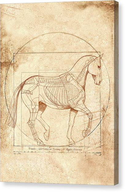 Equine Canvas Print - da Vinci Horse in Piaffe by Catherine Twomey