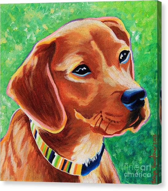 Dachshund Beagle Mixed Breed Dog Portrait Canvas Print