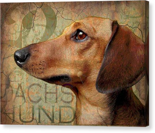 Dachshund Canvas Print by Wendy Presseisen