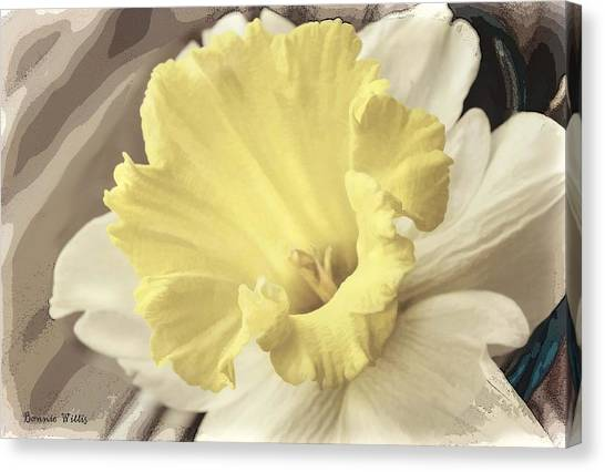 Daffadil In Yellow And White Canvas Print