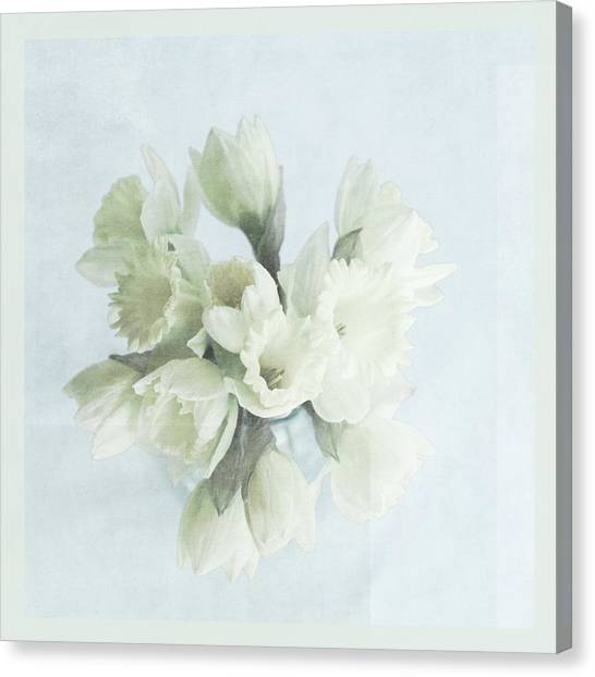 Daffodil Blue Canvas Print by Beverly Cazzell