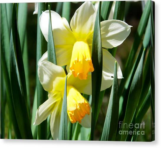 Canvas Print featuring the photograph Daffodil Hug by Kristen Fox