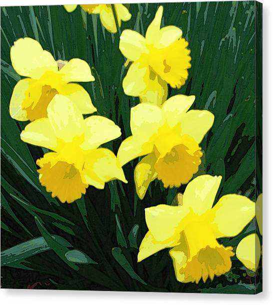 Daffodil Song Canvas Print