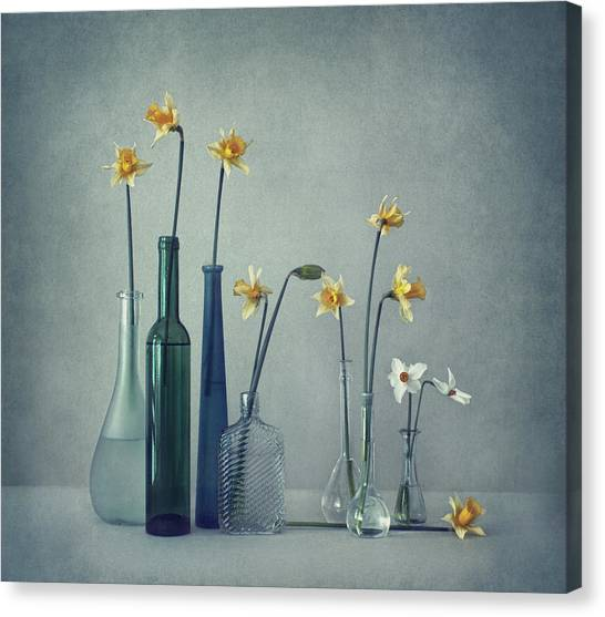 Flower Canvas Print - Daffodils by Dimitar Lazarov -