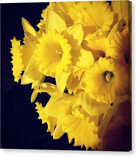 Bouquet Canvas Print - #daffodils #spring #bouquet #igers by Teri Heisler
