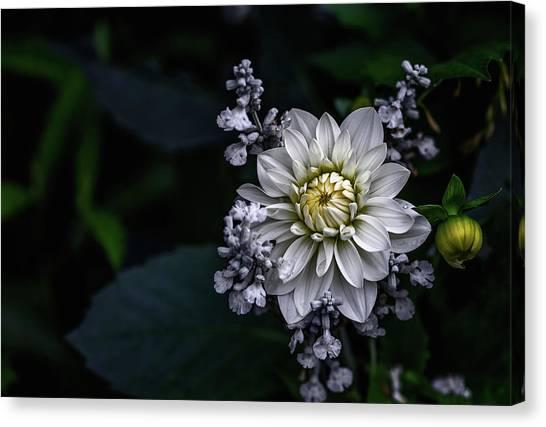 Dahlias Canvas Print - Dahlia Flower by Ronny Olsson