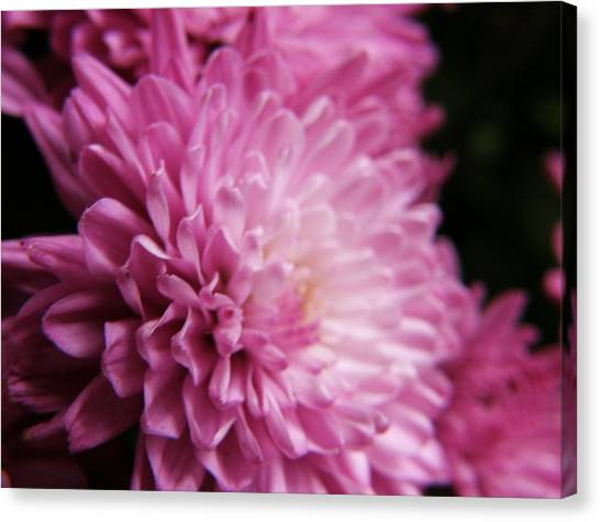 Dahlia Canvas Print by McKenna Konze