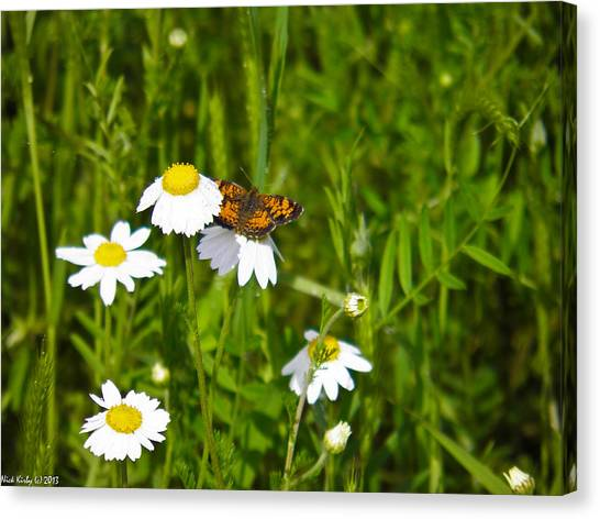 Daisey And Butterfly Canvas Print