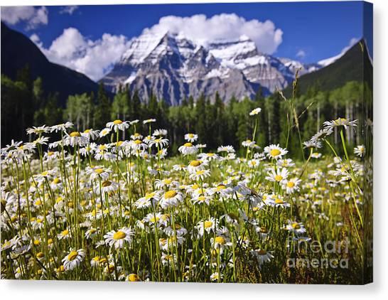Wilderness Canvas Print - Daisies At Mount Robson by Elena Elisseeva