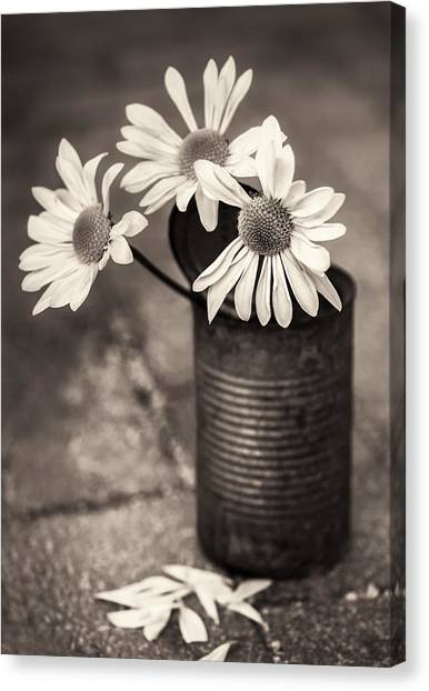 Daisies Can Canvas Print