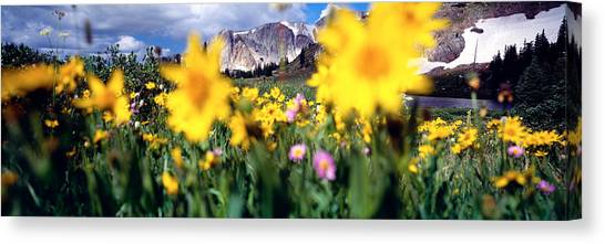 Wy Canvas Print - Daisies, Flowers, Field, Mountain by Panoramic Images
