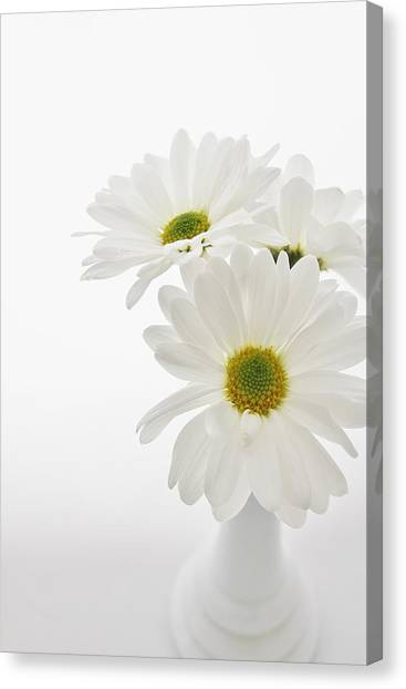 Daisies For You Canvas Print