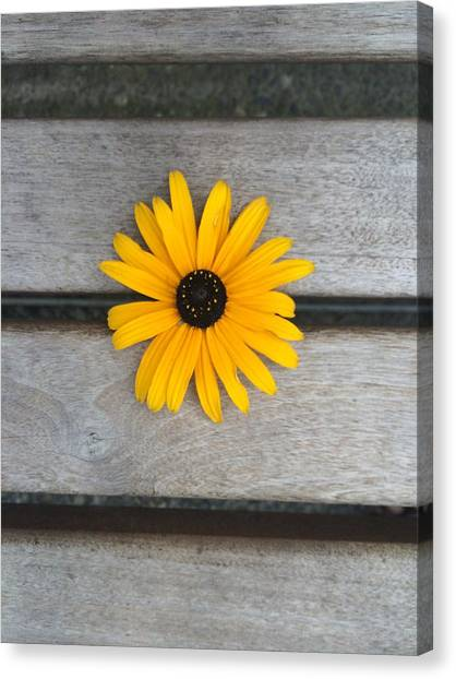 Daisy 3 Canvas Print
