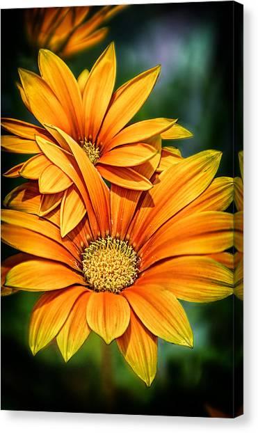 Daisy Blend Canvas Print