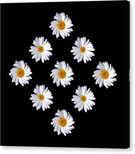 Daisy Diamond Canvas Print by James Hammen