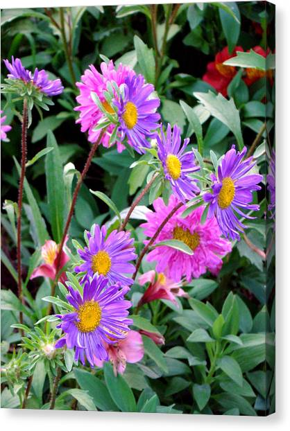 Daisy Flowers  Canvas Print by Sanjeewa Marasinghe