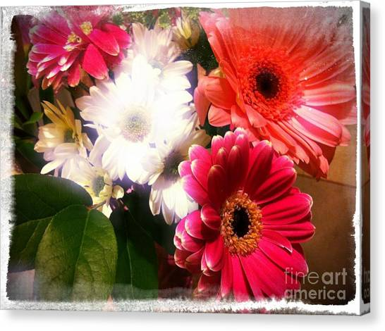Daisy January Canvas Print