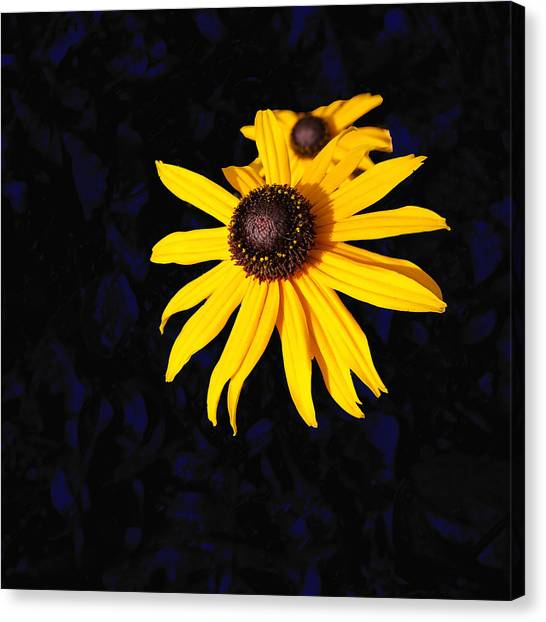 Daisy On Dark Blue Canvas Print