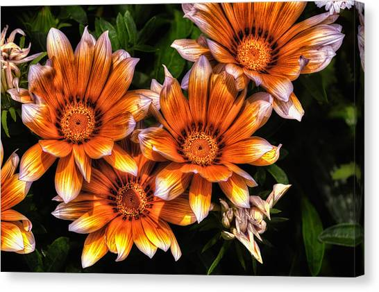 Daisy Wonder Canvas Print