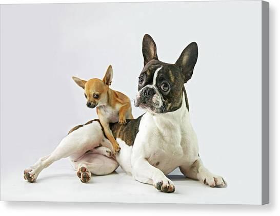 Puppies Canvas Print - Dali & Alfredo by Ddiarte