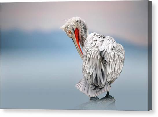 Pelicans Canvas Print - Dalmatian Pelican At Dawn by Xavier Ortega