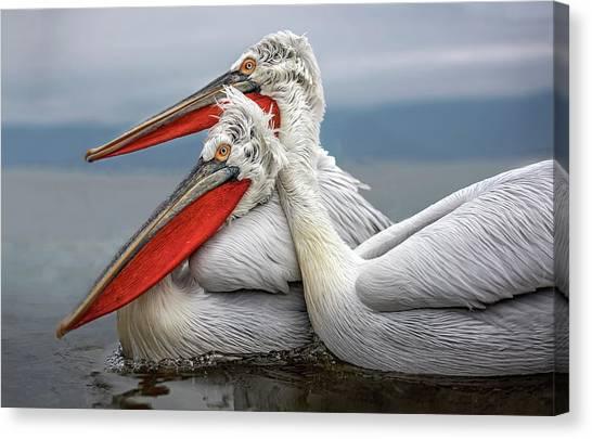 Pelicans Canvas Print - Dalmatian Pelicans by Xavier Ortega