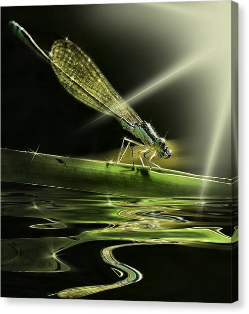 Damsel Dragon Fly  With Sparkling Reflection Canvas Print