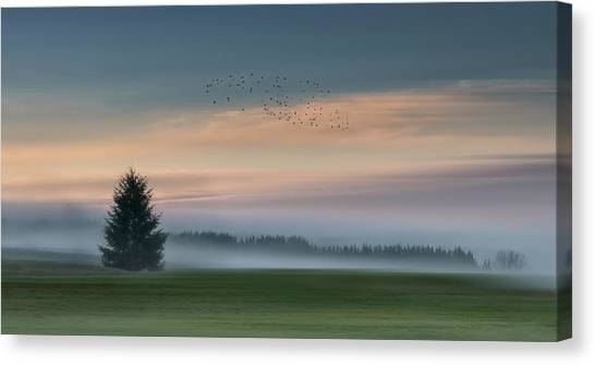 Fir Trees Canvas Print - Dance In The Clouds by Shenshen Dou